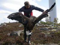 eagle-vs-windmill