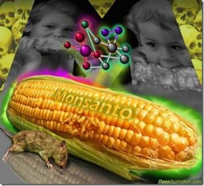 monsanto-corn